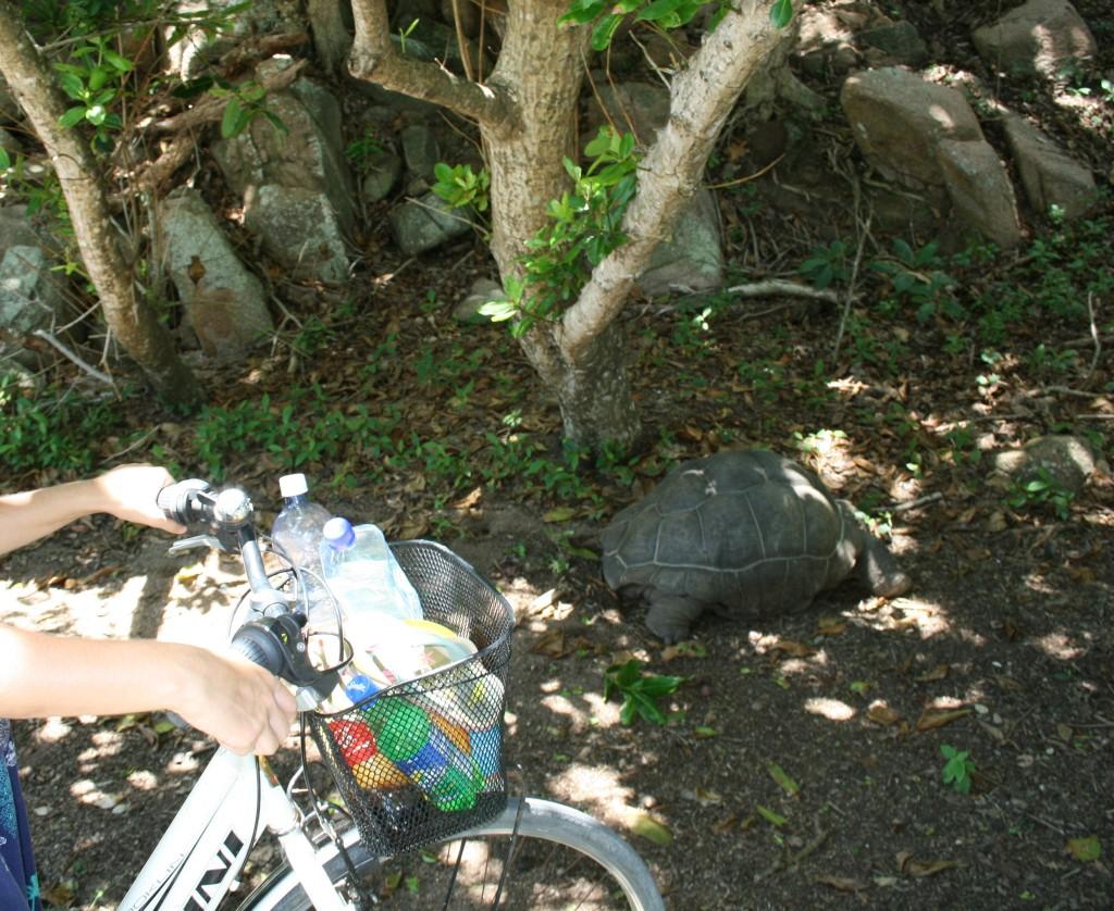 Giant turtle La Digue