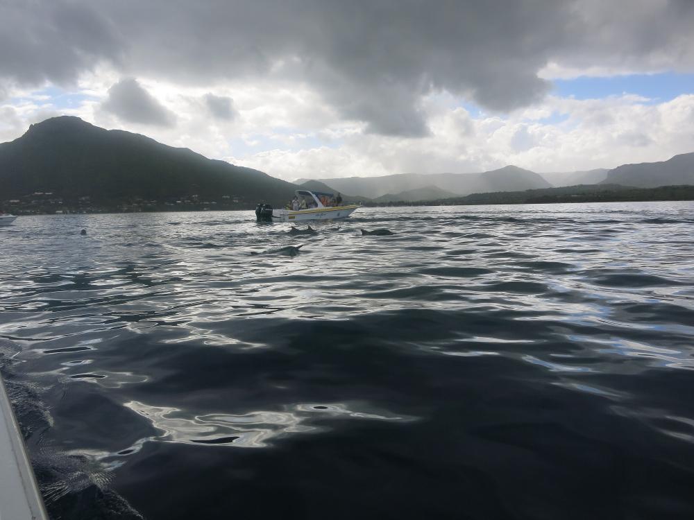 Mauritius dolphin watching