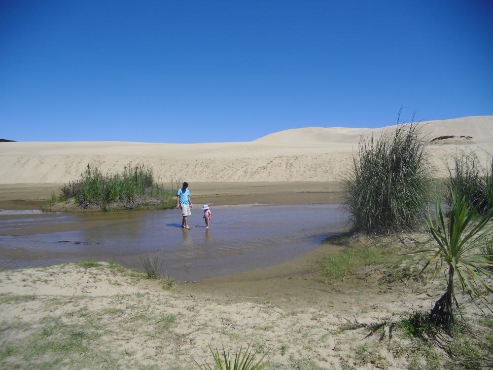 sandboarding dunes new zealand te paki cape reinga