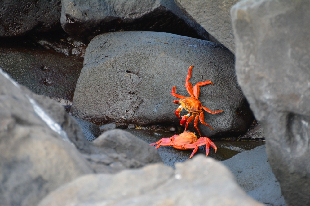 What a colourful crab!