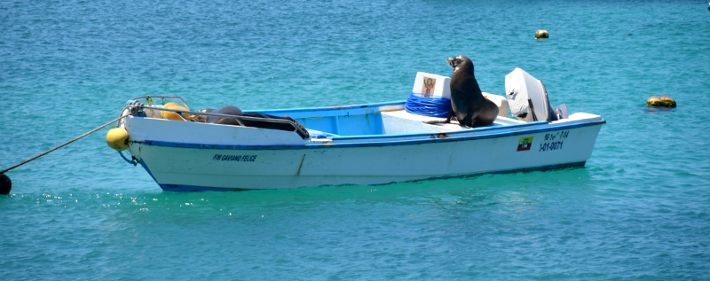 Sealions love boats - Copyright by Ants-in-our-pants.com