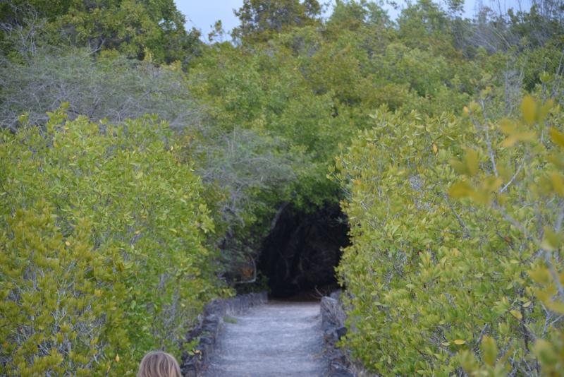 Trail Isabela Galapagos