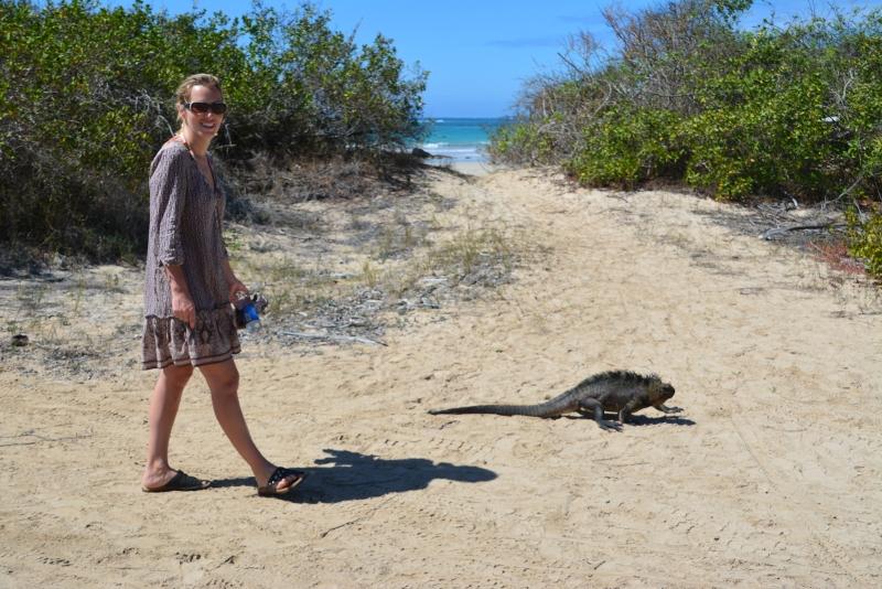 iguana Isabela