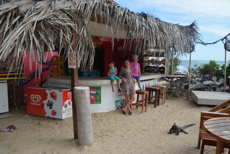 iguana on Galapagos