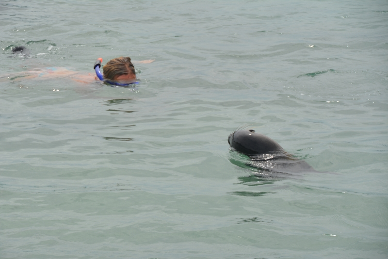 snorkeling with a sealion