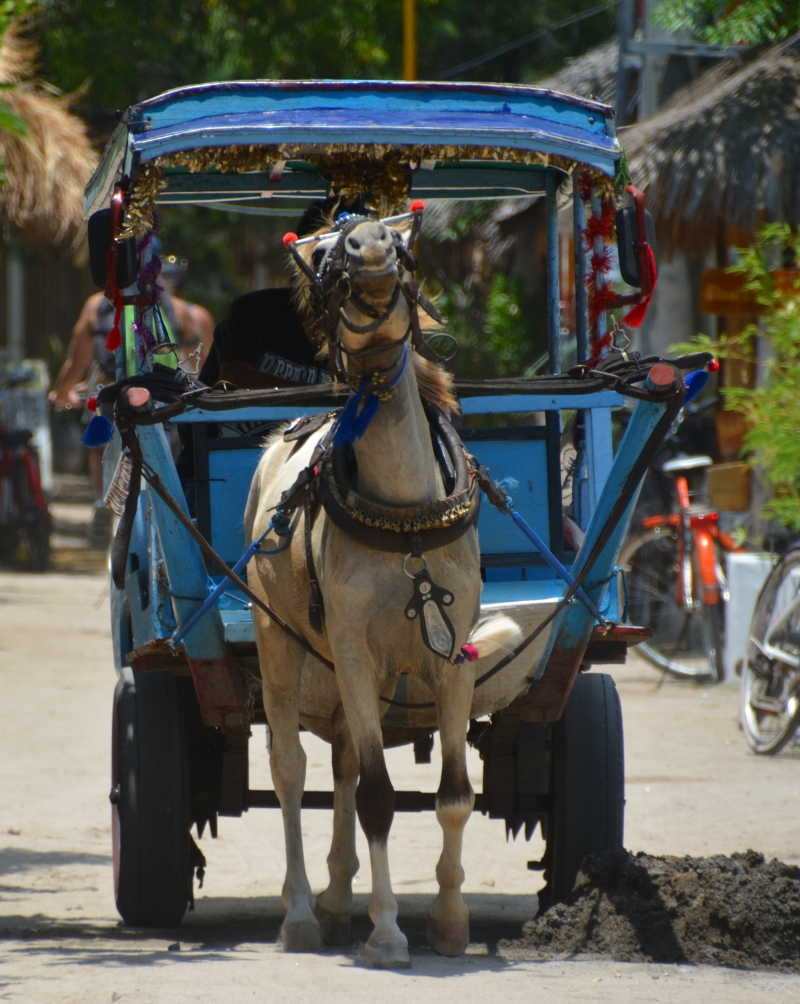 Horse carts on Gili - Copyright by www.ants-in-our-pants.com